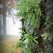 Lichen by calm