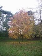 13th Nov 2012 - Tree in the park
