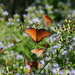 So Many Butterflies by kerristephens