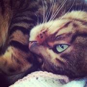 13th Nov 2012 - Cuddles