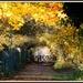 Autumn Path by rosiekind