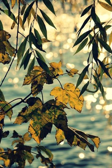 New lens leaves by judithg