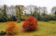 14th Nov 2012 - autumn on the other side of the valley