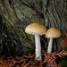 Cedar With Mushrooms by vickisfotos