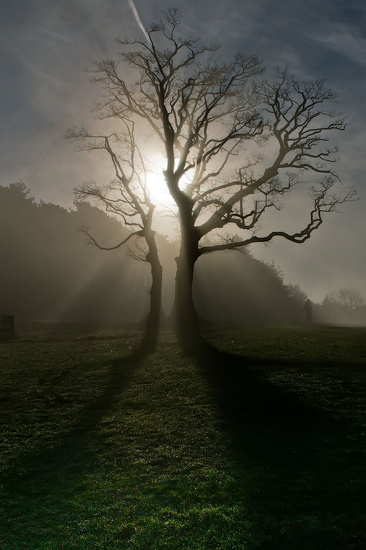 Misty Morning Tree by harveyzone