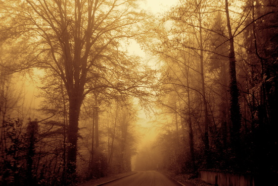 Mist in sepia by cocobella