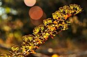 16th Nov 2012 - November Sunshine