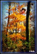 30th Oct 2012 - Hickory