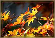 31st Oct 2012 - Leaves