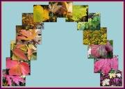 17th Nov 2012 - Leafy rainbow