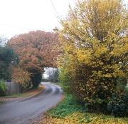 17th Nov 2012 - Down the lane