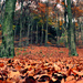 Autumn Carpet by andycoleborn