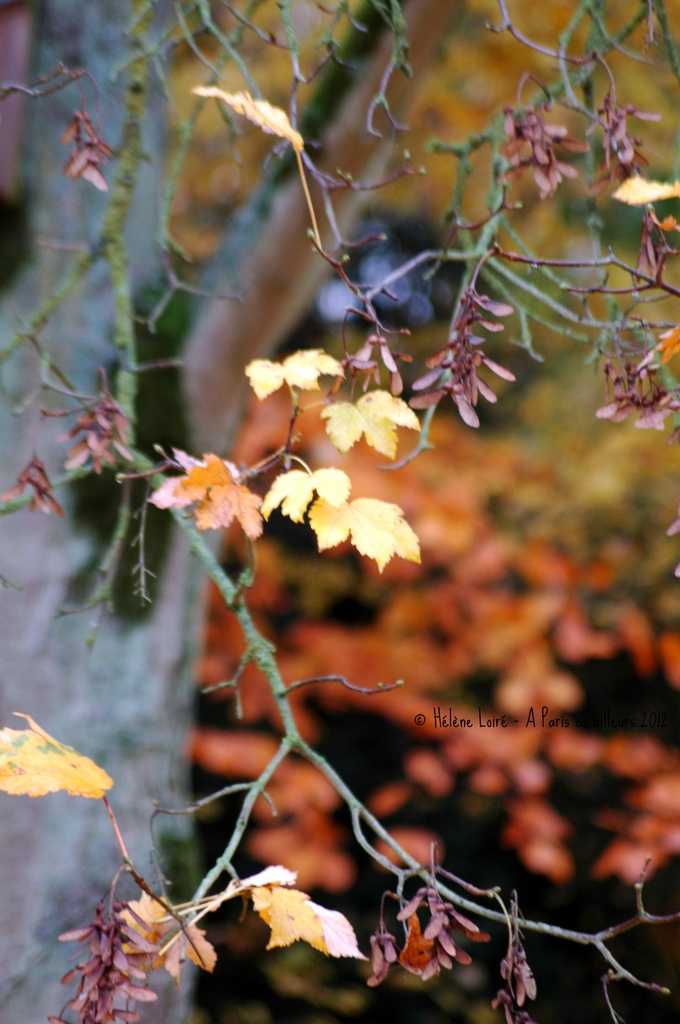 Autumn by parisouailleurs