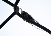 22nd Nov 2012 - Cicada on a grid