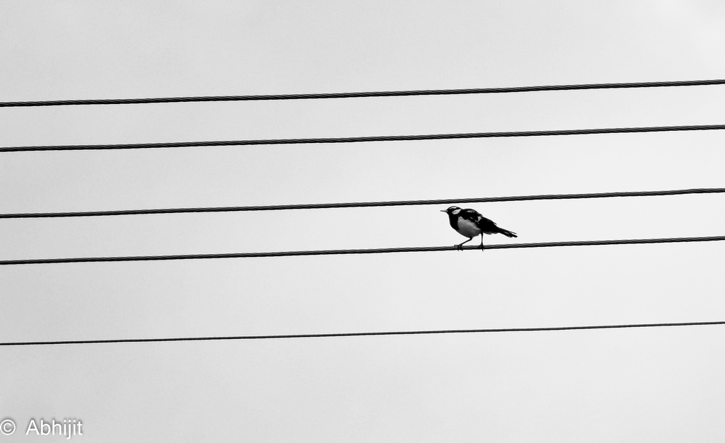 Lonesome by abhijit