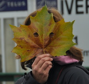 22nd Nov 2012 - Masquerade Leaf