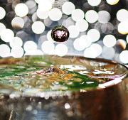 24th Nov 2012 - water drops II