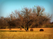 25th Nov 2012 - Haybales in the Field
