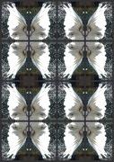 26th Nov 2012 - Patterned Angel wings