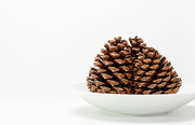 26th Nov 2012 - Pine Cones