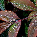 Nature's Jewels 2 by calm