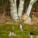 Squirrel by vickisfotos
