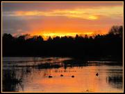 28th Nov 2012 - Sunset across the common