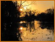 29th Nov 2012 - Cast adrift on golden pond