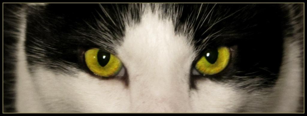 Cat's Eyes by filsie65
