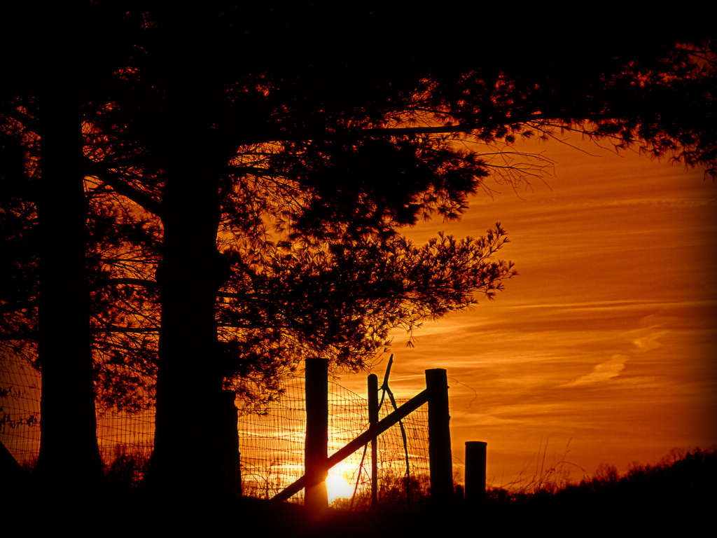 Burnt Orange by calm