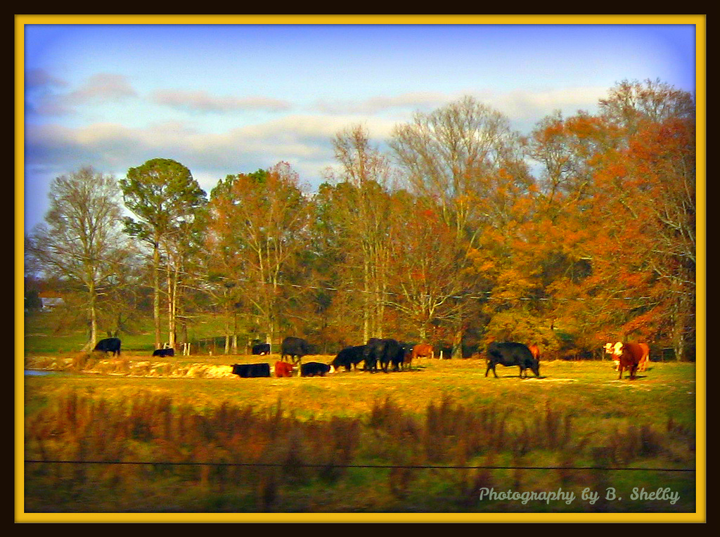 Rural USA by vernabeth
