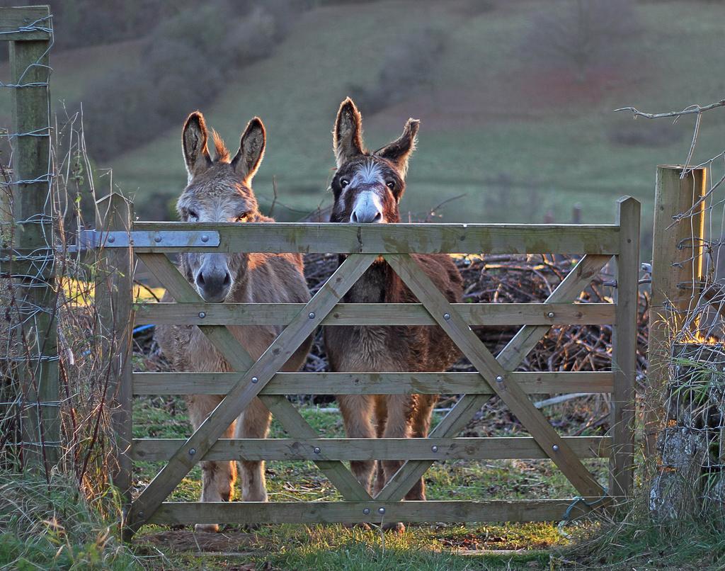 one trick pony?....erm, I mean donkey. by jantan