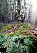 1st Dec 2012 - Dec 01: Green