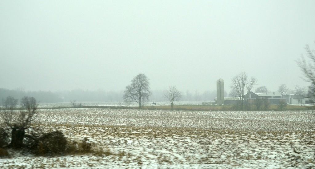 snowy and foggy by summerfield