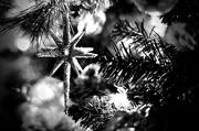 3rd Dec 2012 - Tree Bling