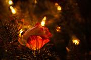 4th Dec 2012 - Floral Decorations
