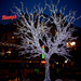 White Tree of Gondor? by joa