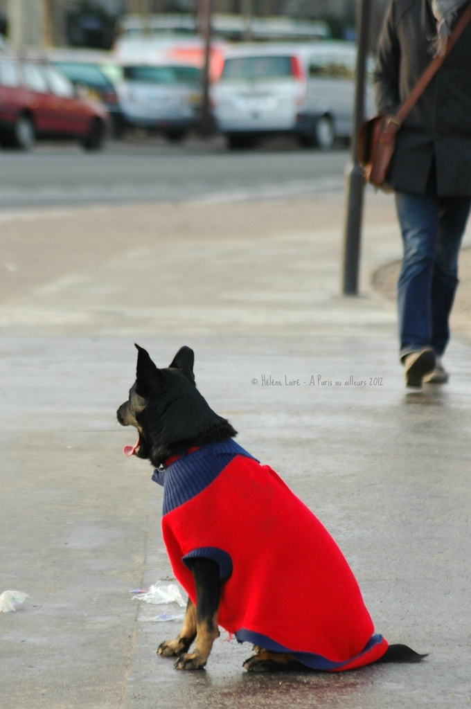 Just for fun: The little red dog by parisouailleurs