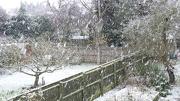 7th Dec 2012 - Snow