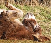 7th Dec 2012 - having a lie down
