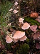7th Dec 2012 - Fungus on a trunk - 3
