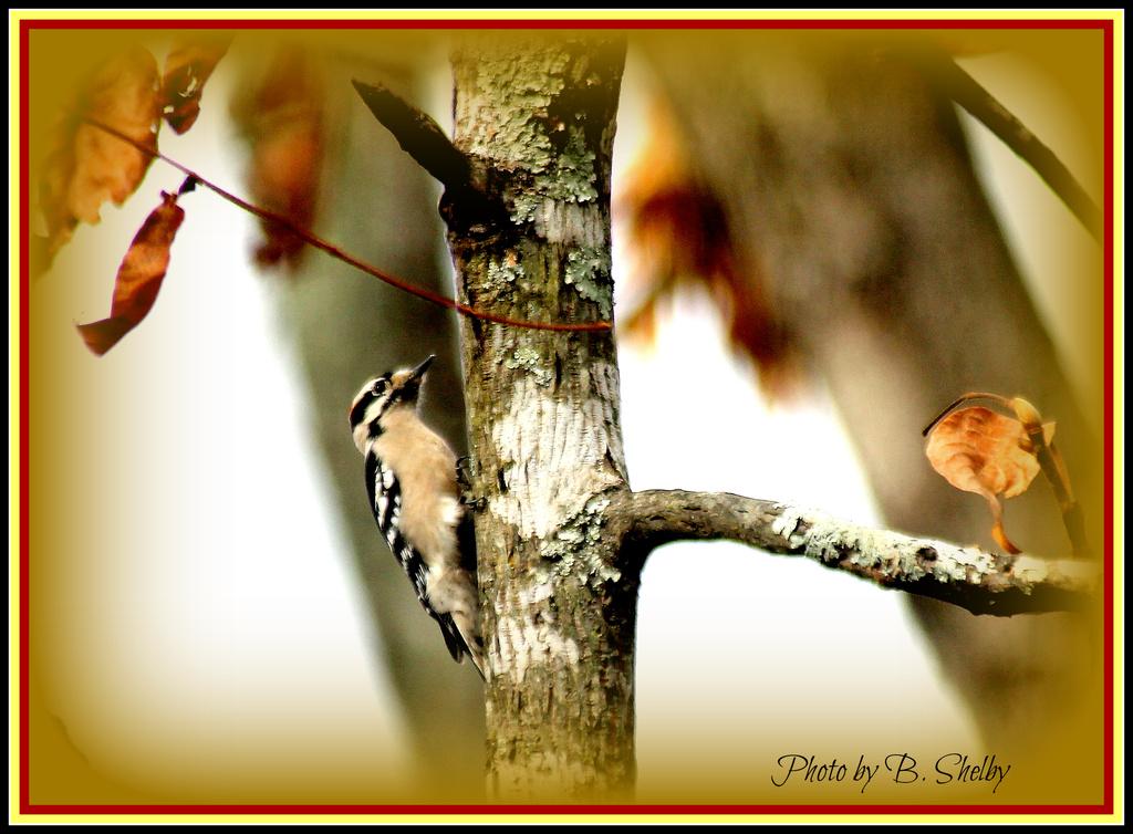 Woody on a tree by vernabeth