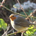Christmas Robin by daffodill