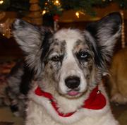 10th Dec 2012 - Maggie
