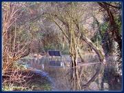 11th Dec 2012 - Floods in the pightle