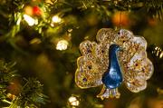 11th Dec 2012 - I Love Peacocks!