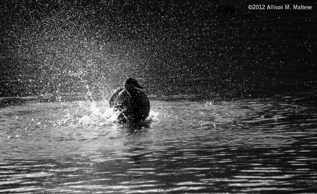 Making a Splash by falcon11