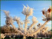 12th Dec 2012 - Hoar Frost 1