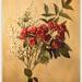 bouquet by ltodd