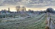 12th Dec 2012 - winter at the allotments.....